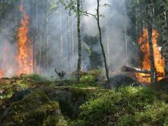 Из-за особого противопожарного режима в Севастополе запрещена любительская и спортивная охота!