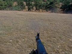 Охота на крымского благородного оленя. Открытие сезона охоты на копытных 2020